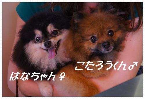 2012624-2_convert_20120624194856.jpg