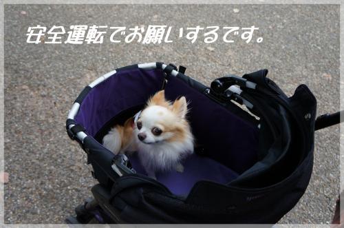 DSC00320_convert_20121027212205.jpg