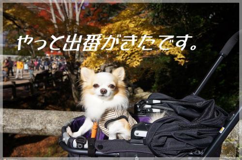 DSC01447_convert_20121128185005.jpg