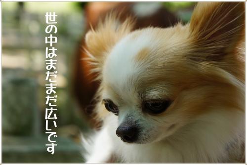 DSC05831_convert_20120527205208.jpg