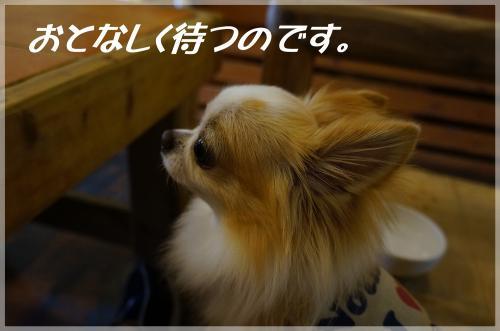 DSC07767_convert_20120819220259.jpg