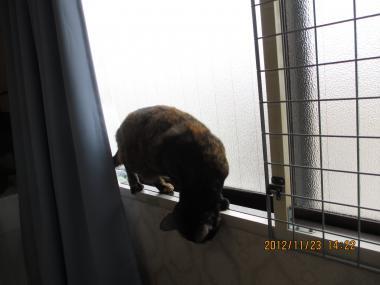 2012.11.23-2-1-yuka