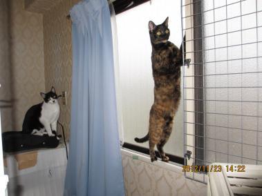 2012.11.23-2-2-nao & yuka
