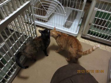 2012.12.12-7-yuka&yuki
