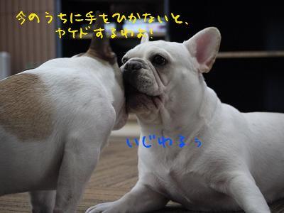 kiji_24_5_14_ramutoreo2.jpg
