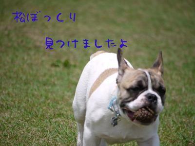 kiji_24_6_17_reo3.jpg