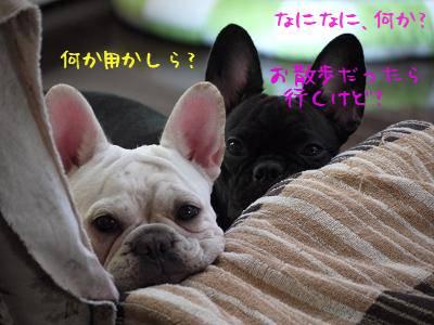 kiji_24_7_28_ramutomomo1.jpg