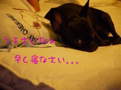 kiji_24_8_13_momo1.jpg