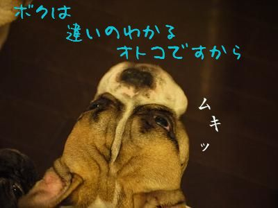 kiji_24_8_14_reo1.jpg