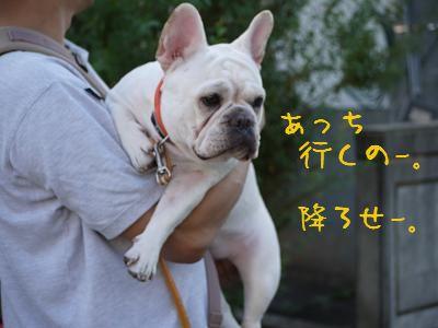 kiji_24_8_21_ramu1.jpg