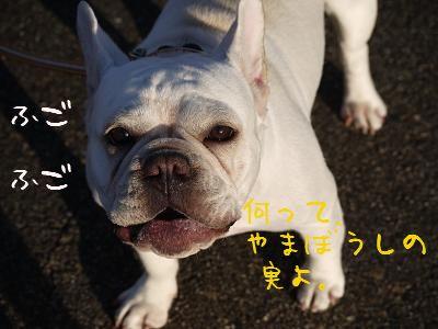 kiji_24_8_21_ramu2.jpg