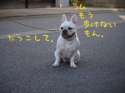 kiji_24_8_21_ramu3.jpg