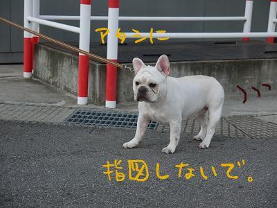 kiji_24_8_25_ramu2.jpg