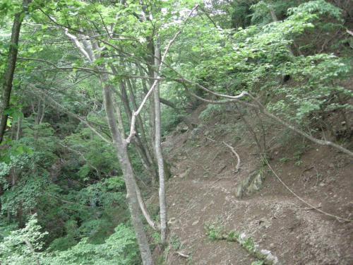 霊仙山山道1