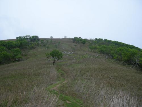 霊仙山山道4
