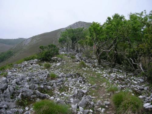 霊仙山山道6