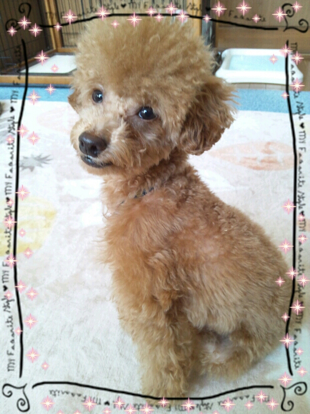 fc2blog_20121103081944630.jpeg