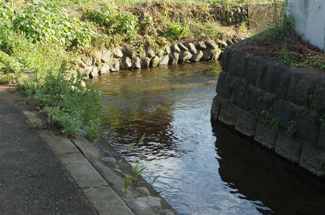 上田用水のとある流れ1