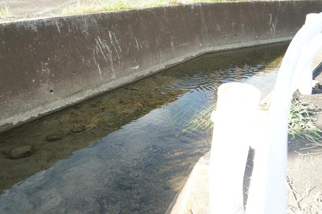 上田用水のとある流れ3