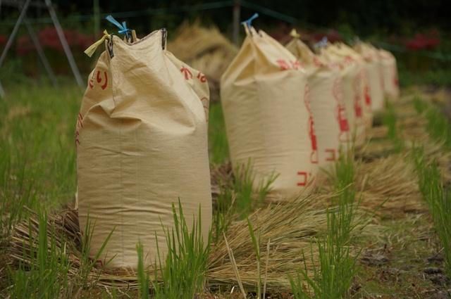 米袋に入った米たち