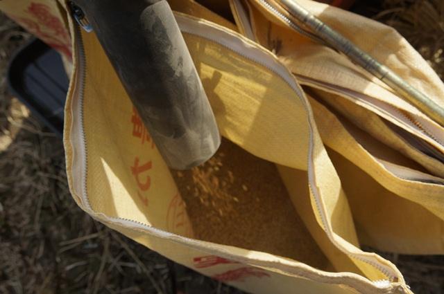 排出される籾