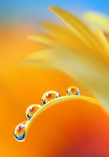 Flowers  20120810-A