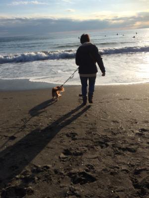 老犬とおばさんと海