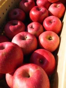 2012リンゴ2