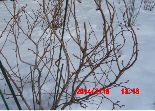 山の畑の雪3