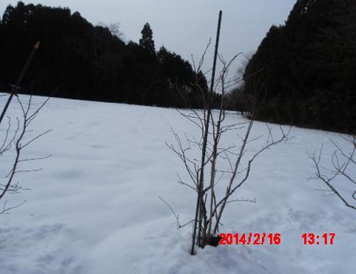 山の畑の雪1
