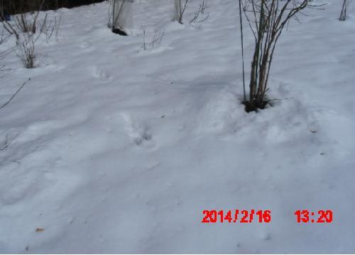 山の畑の雪2