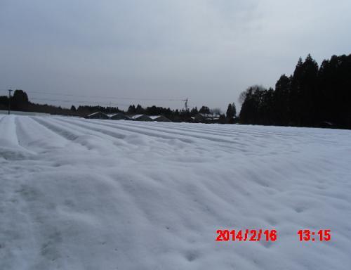 20140216雪景色2