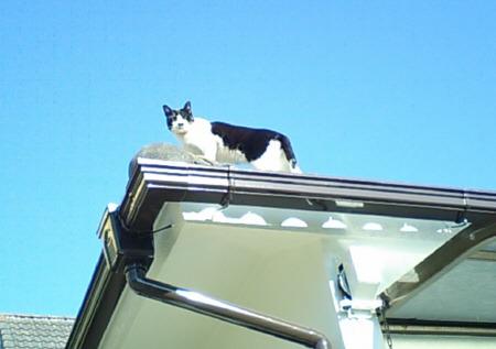 りくらむのブログ-屋根の上のにゃんこ