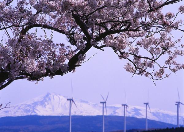 2012.04.29浜館公園11b