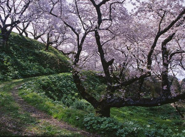 2012.04.29浜館公園14b