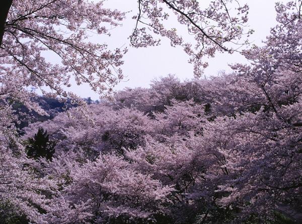 2012.04.29浜館公園09b