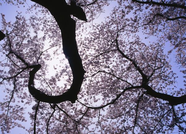 2012.04.29浜館公園02b