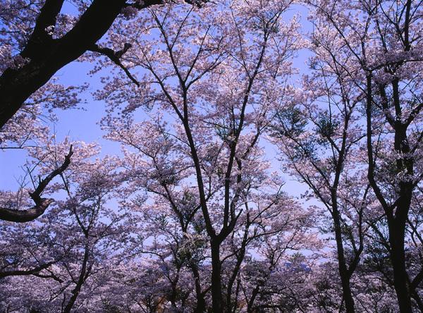 2012.04.29浜館公園01b