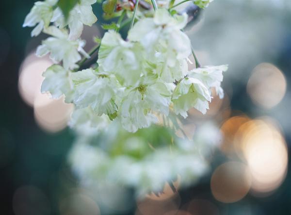 2012.05.07日本国花苑06b