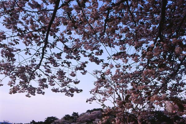 2012.05.07日本国花苑04b