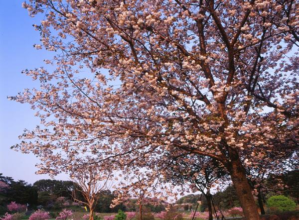 2012.05.07日本国花苑03b