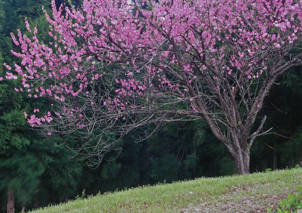 2012.05.13由利本荘市02b