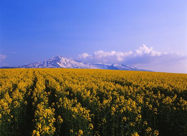2012.05.21桃野地区10b