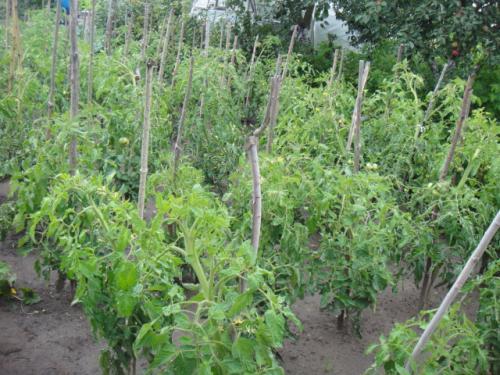 07 2012 ポーランドの家庭菜園