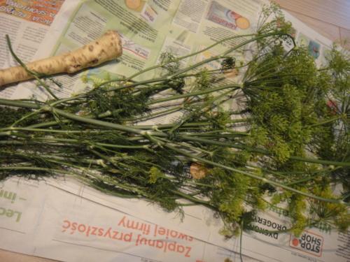 07 2012 ポーランドでピクルスとサワー作り