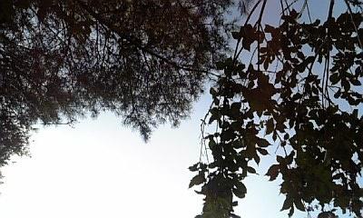 DVC00147_20120827214605.jpg