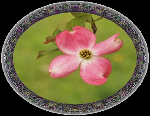 2625○91黒円形透過花水木