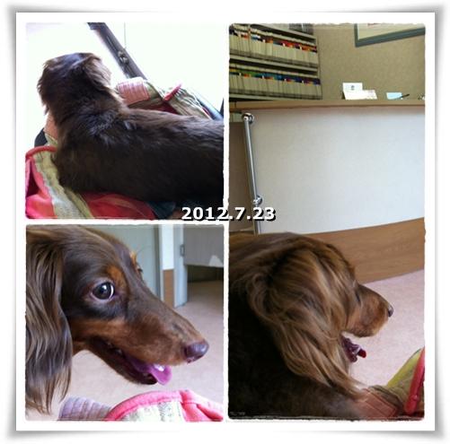 20120724-04.jpg