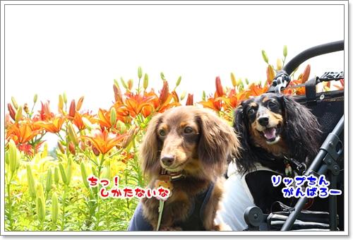 20120804-05.jpg