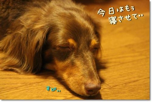 20120903-04.jpg